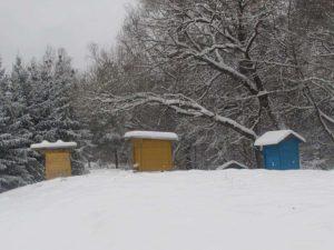 2020 metų gruodis Puvočių kaime | N. Marcinkevičienės nuotrauka