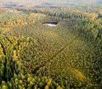 Rengiamas trečiasis miškų politikai skirtas aptarimas | lrv.lt nuotr.