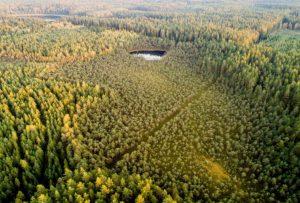 Rengiamas trečiasis miškų politikai skirtas aptarimas   lrv.lt nuotr.