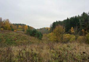 """Europos ekologiniam tinklui """"Natura 2000"""" Lietuvoje priskirti dar devyni draustiniai   lrv.lt nuotr."""