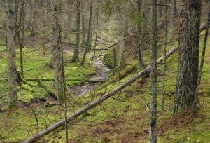 Natura 2000 teritorija. Vakarų taigos buveinė | lrv.lt nuotr.