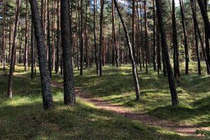 Seimo narys J. Urbanavičius seime subūrė bendraminčių grupę ir skleis miško puoselėjimo sumanymus | Seimo kanceliarijos archyvo nuotr.