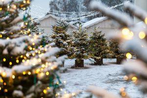 Kalėdų eglutės   vilnius.lt nuotr.