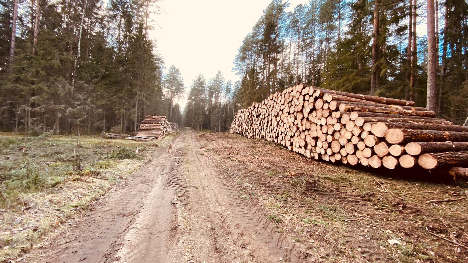 Paruošta išvežti į Latviją.-A.Gaidamaviciaus nuotr