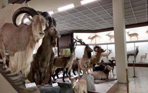 Tado Ivanausko muziejus | am.lt nuotr.