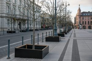 Vilnius, medžiai | vilnius.lt, s. Žiūros nuotr.