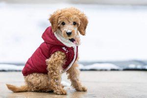 Šuo, žiema | vmvt.lt nuotr.