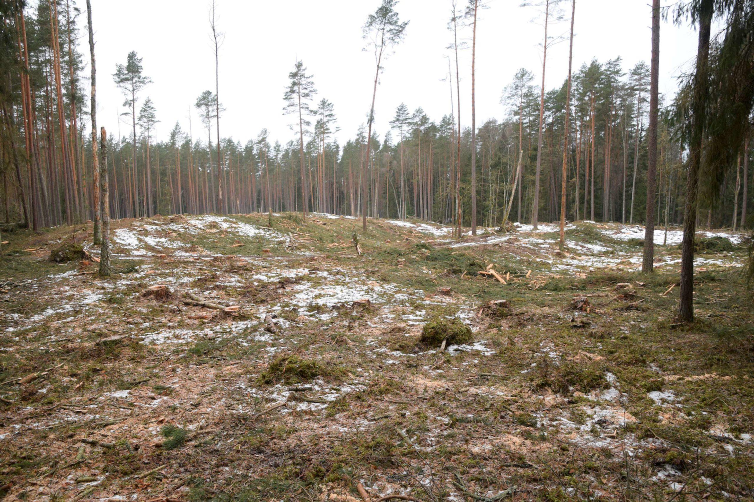 2019 genetinis medynas, specialieji kirtimai | Baltijos aplinkos forumo archyvo nuotr.